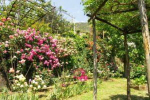 027. Giardino Segreto dell'Anima - Tramonti