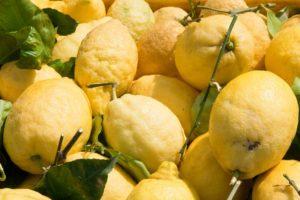 021. Limoni di Amalfi
