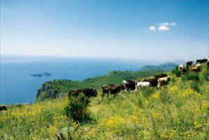 Vacche Ageroline
