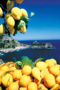 Conca Dei Marini Limoni
